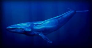 jogo-da-baleia-azul-990x520